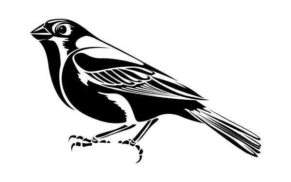 Sparrow tattoos Ideas: Pictures Of Tribal Bird Tattoos  Tribal Bird Tattoos