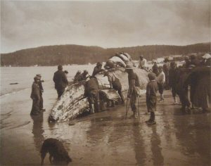Makah Tribe Whaling